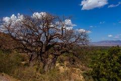 Arbre africain de baobab de paysage photos libres de droits