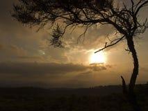 arbre africain de coucher du soleil Photos stock