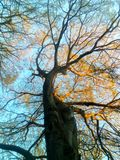 Arbre animal intéressant de forme avec la lumière de coucher du soleil Image libre de droits