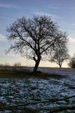 Arbre après premier automne de fonte de neige Images stock