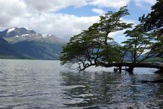 Arbre, Argentine photo libre de droits