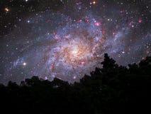 Arbre arrière de silhouette de galaxie en ciel nocturne de forêt images libres de droits