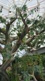 Arbre artificiel, nids accrochants, toit en verre Photo stock