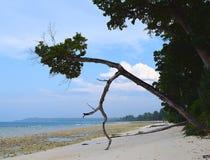 Arbre attrayant de penchement chez Sandy Sea Shore scénique - Laxmanpur, Neil Island, Andaman Nicobar, Inde image libre de droits