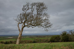 Arbre au bord de Dartmoor Photo stock