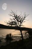 Arbre au coucher du soleil photos libres de droits