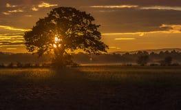 Arbre au coucher du soleil Image stock