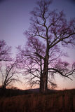 Arbre au coucher du soleil avec le ciel pourpré Photo libre de droits
