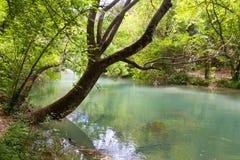 Arbre au-dessus de fleuve dans la forêt Photo stock