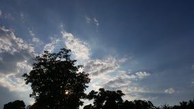 Arbre au-dessus du soleil Images libres de droits