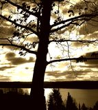 Arbre au-dessus du soleil Photos libres de droits