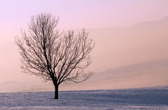 Arbre au lever de soleil Photographie stock libre de droits