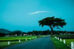 Arbre au milieu de ciel bleu de champ et d'espace libre Images stock