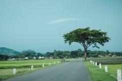 Arbre au milieu de ciel bleu de champ et d'espace libre Photos libres de droits