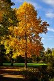 Arbre avec de belles feuilles d'automne de Cclorful photo stock