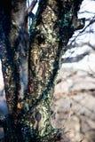 Branche d 39 arbre avec le champignon de mousse photo stock - Mousse sur les arbres ...