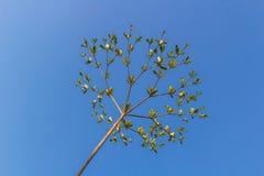 Arbre avec des branches sous le ciel bleu Images stock