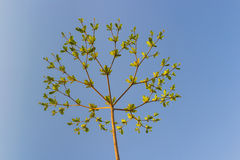 Arbre avec des branches sous le ciel bleu Image libre de droits