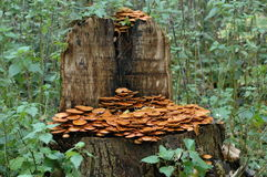 Arbre avec des champignons de couche Photos libres de droits