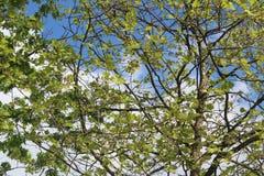 Arbre avec des feuilles dans une forêt Image libre de droits