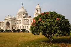 Arbre avec des fleurs près de mémorial de Victoria en parc dans l'Inde de kolkatta Photo stock