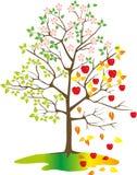 Arbre avec des pommes, saisons Photographie stock