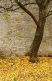 Arbre avec du tapis des lames jaunes Photographie stock