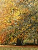 Arbre avec l'automne image libre de droits