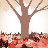 Arbre avec l'automne tombé de feuilles Images libres de droits