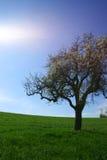Arbre avec l'herbe Images libres de droits