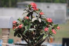 Arbre avec la fleur rouge Photos libres de droits