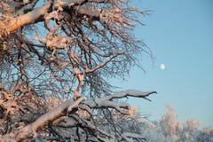 Arbre avec la lune Image libre de droits