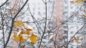 Arbre avec la neige sur peu de feuilles sèches l'hiver de Londres de ville banque de vidéos