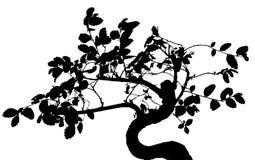 Arbre avec le branchescontour large Image stock