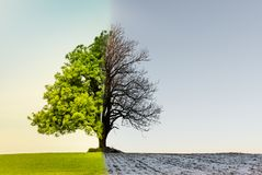 Arbre avec le changement de climat ou de saison photographie stock
