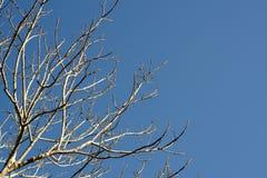 Arbre avec le ciel bleu clair Photos stock