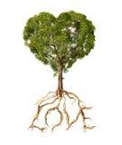 Arbre avec le feuillage avec la forme d'un coeur et des racines comme texte Lo Images libres de droits