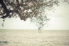 Arbre avec le fond de mer Photo stock
