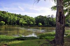 Arbre avec le grand trou le long d'une rivière Photographie stock