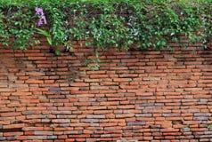 Arbre avec le mur de briques Images libres de droits