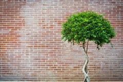 Arbre avec le rétro mur de briques Images stock
