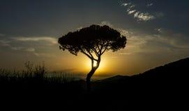 Arbre avec le soleil parmi les brunchs Images libres de droits