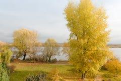 Arbre avec les lames d'or en automne Photo stock
