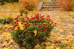 Arbre avec les lames d'or en automne Photographie stock