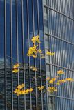 Arbre avec les lames jaunes devant une grande construction Photographie stock libre de droits