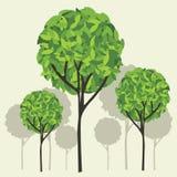 Arbre avec les lames vertes Images stock