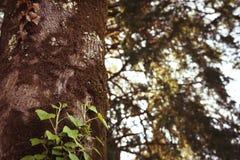 Arbre avec les lames vertes Photo stock