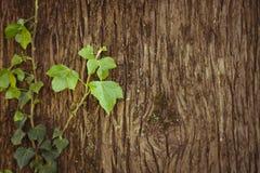 Arbre avec les lames vertes Photographie stock libre de droits