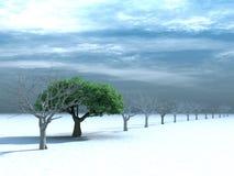 Arbre avec un feuillage vert sur la neige Photographie stock