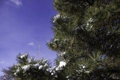 Arbre avec une peu de neige Photos libres de droits